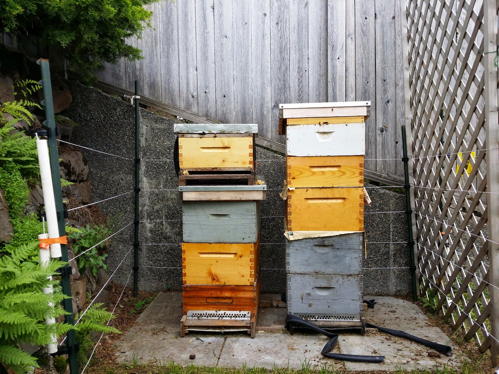 supersede me adventures in backyard beekeeping 2014