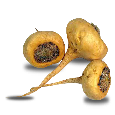 Peruvian viagra