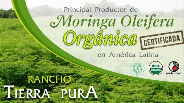 Productor de Moringa