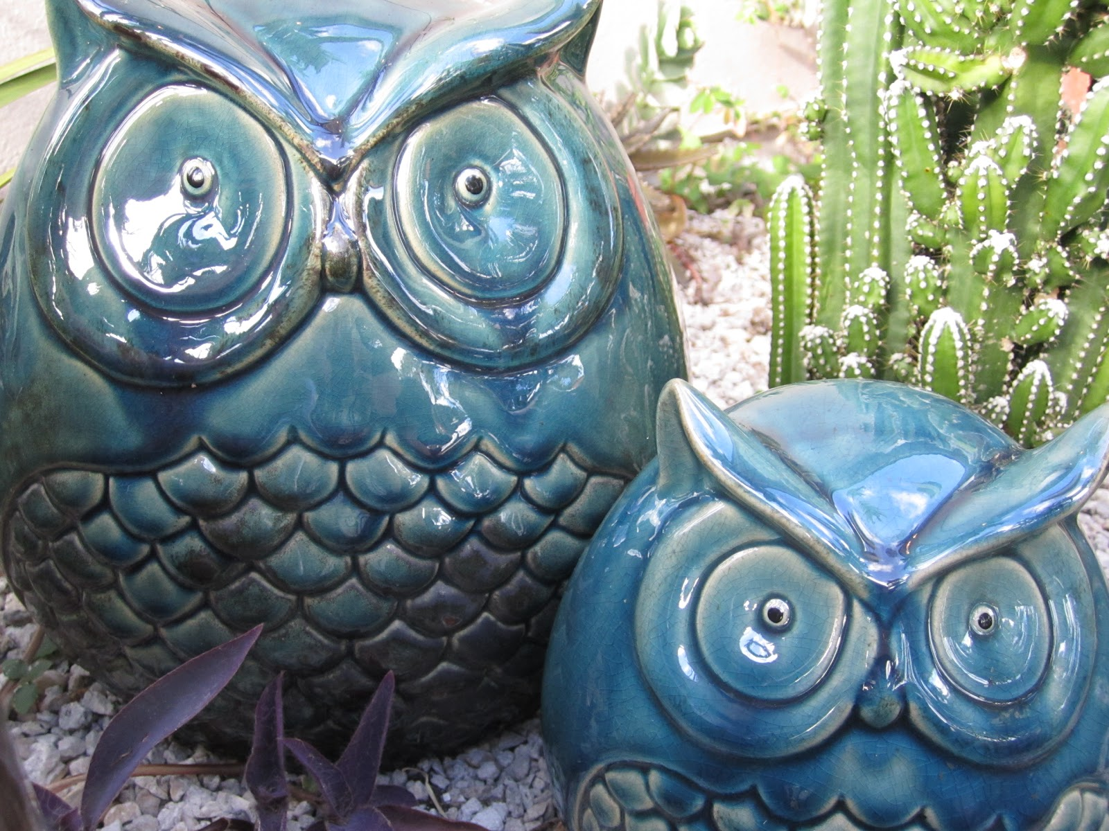 Inspire Bohemia Succulents Cacti and Owls in the Garden