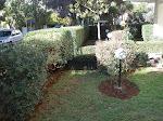 κήπος στον χολαργό