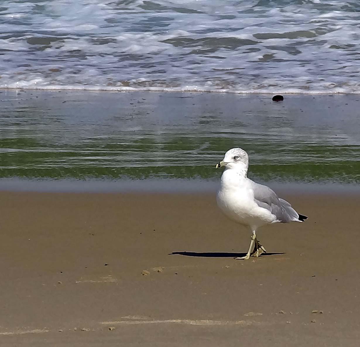 Joe's Retirement Blog: Marconi Beach, Cape Cod National
