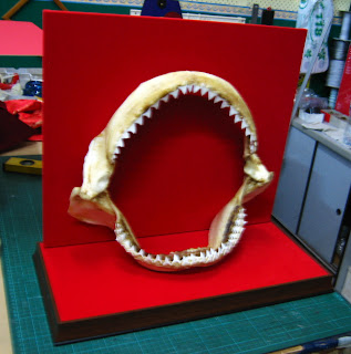 Frame a Shark Jaw