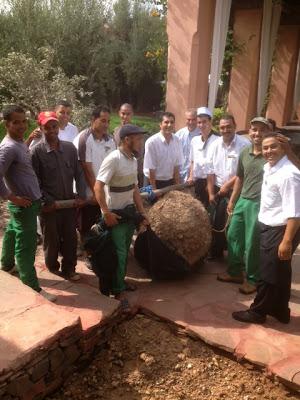 15 jardiniers pour la plantation d'un olivier aux Deux Tours Marrakech