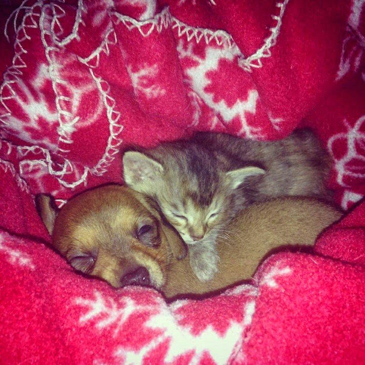 stray kitten abandoned puppy adele and chip-9