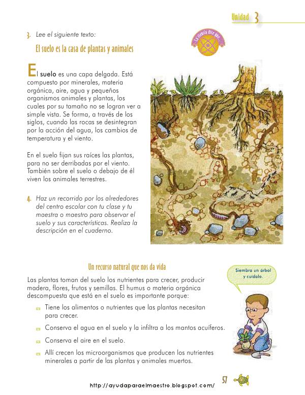 Qu es el suelo vegetal y la erosi n cuidemos - Suelos para ninos ...