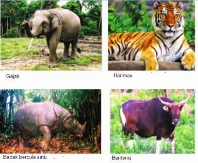 contoh fauna Indonesia bagian Barat