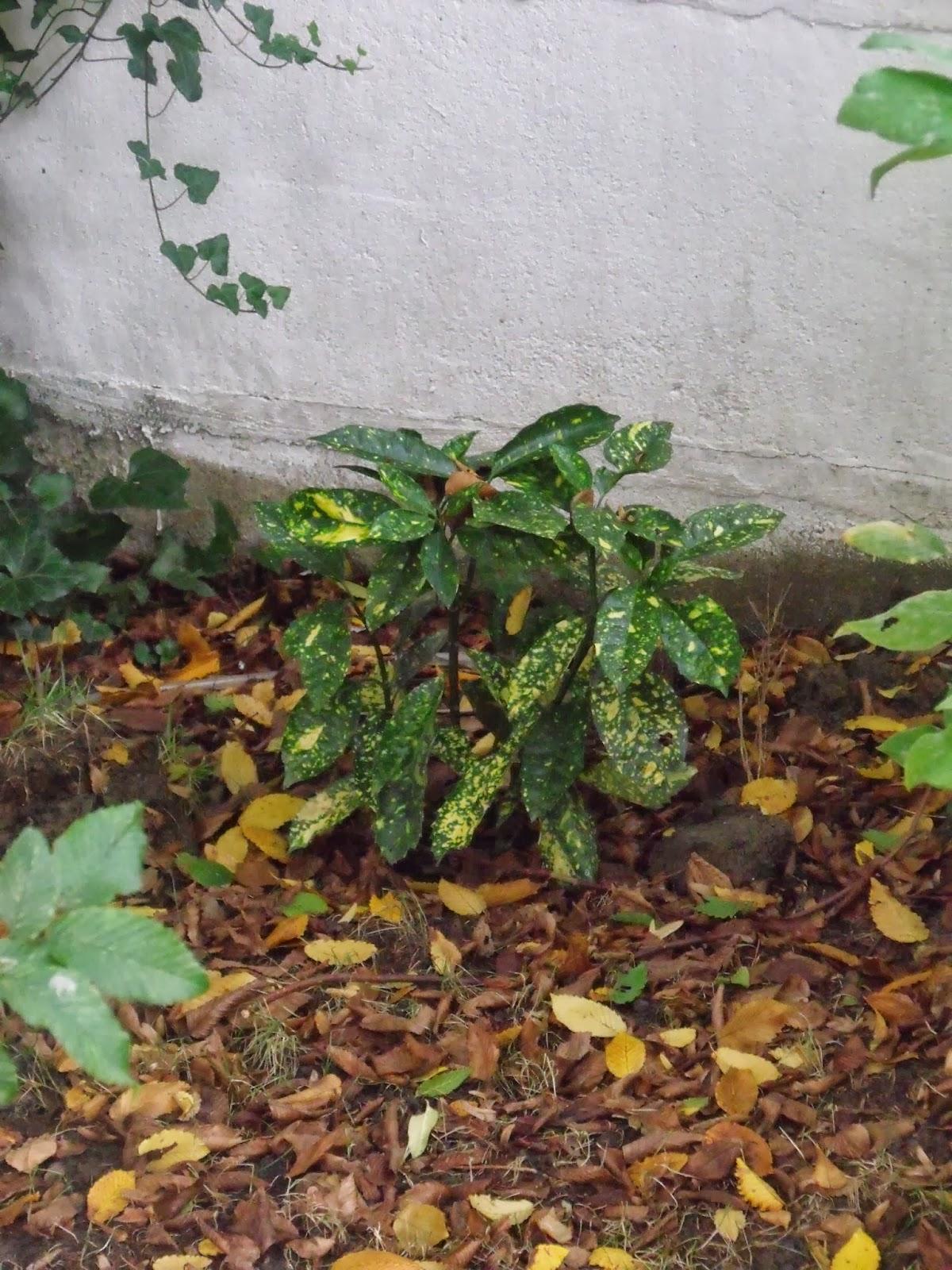 Jardin contemporain tourcoing inventaire des haies - Arbuste contemporain ...