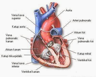 Cara Pengobatan Penyakit jantung