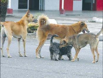 perros devoran dueño alimentarlos