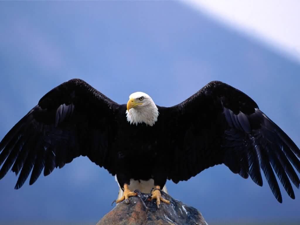 Exotic Animals: Bird Pictures : Eagle Amazing Animal