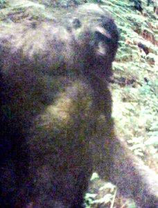 Bigfoot Pic From Hearing Aid Commercial