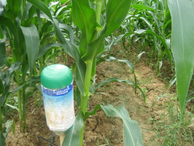 the importance of foliar fertilization The 3 most important reasons to start with foliar fertilization: 1 the optimal  availability for your crop nutrients from ordinary soil fertilizations are often totally  or.