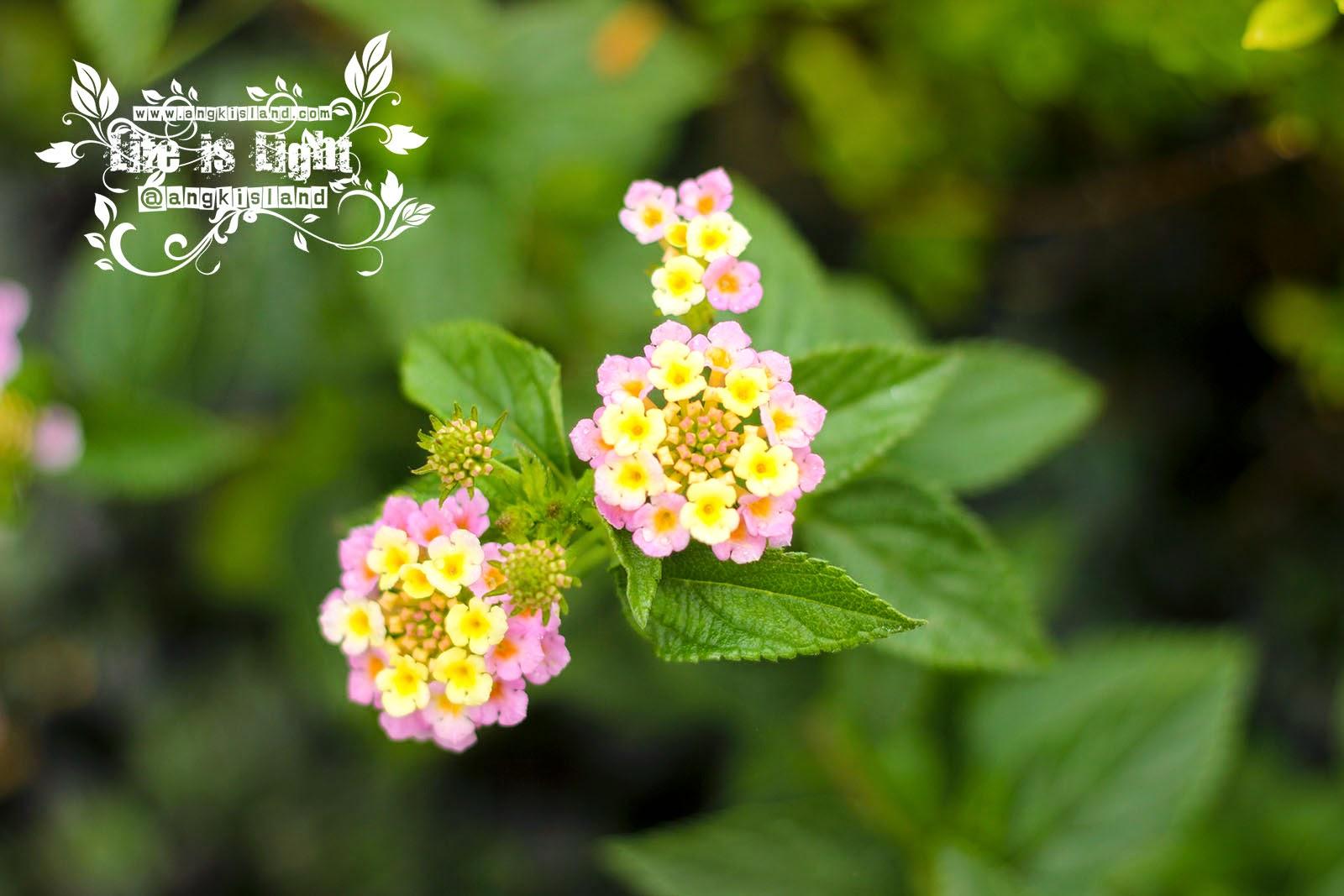 bunga di Telaga Warna Dieng