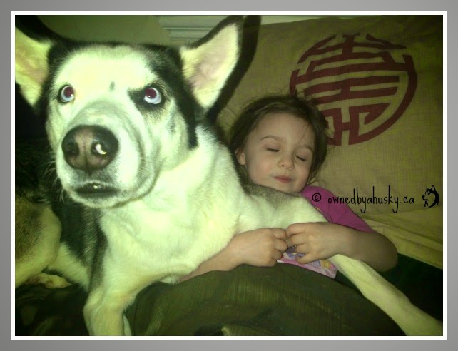 huskies are good with kids