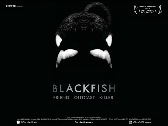 blackfish, black fish, blackfish movie, blackfishmovie, killer whales, killer whale truth, killer whale attacks, killer whale movie, cnn films, sundance films, killer whale attack movie