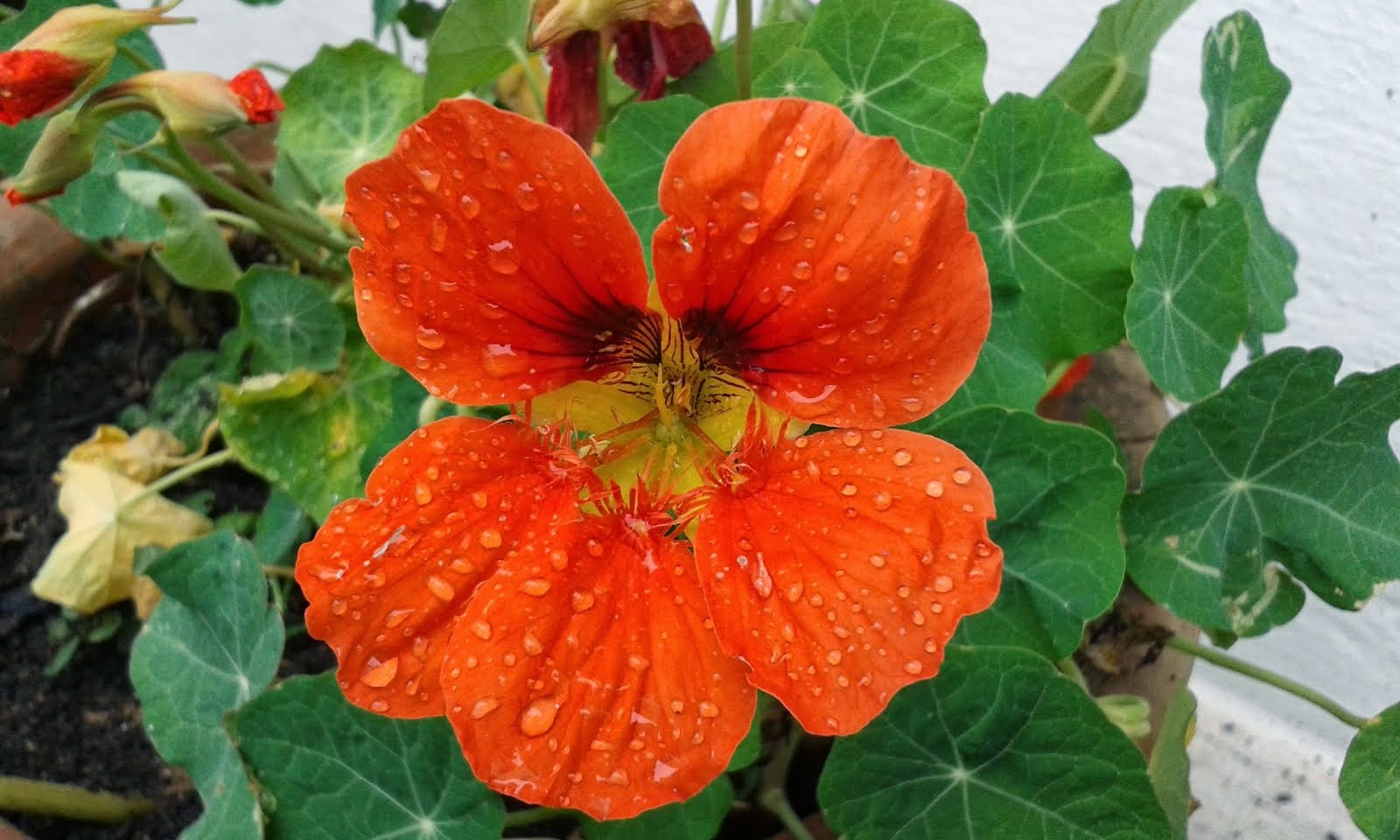 Blushing orange