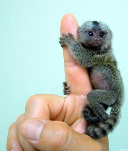 Rare Animals Blog, Protect Rare Animals: An Introduction ...