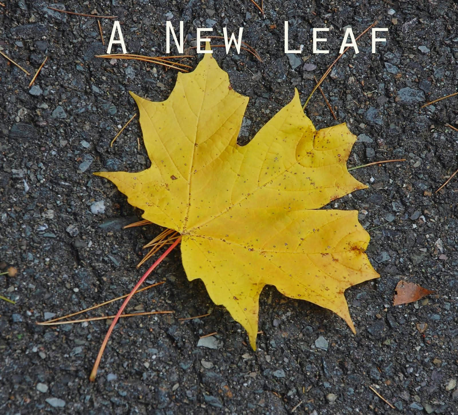 A New Leaf