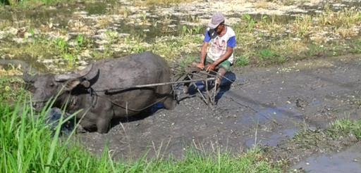 Countryside Bali Tour - Bali, Island, Holidays, Tours, Attractions