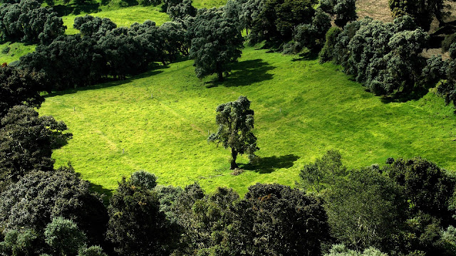 Green Landscape Scenery HD Wallpaper