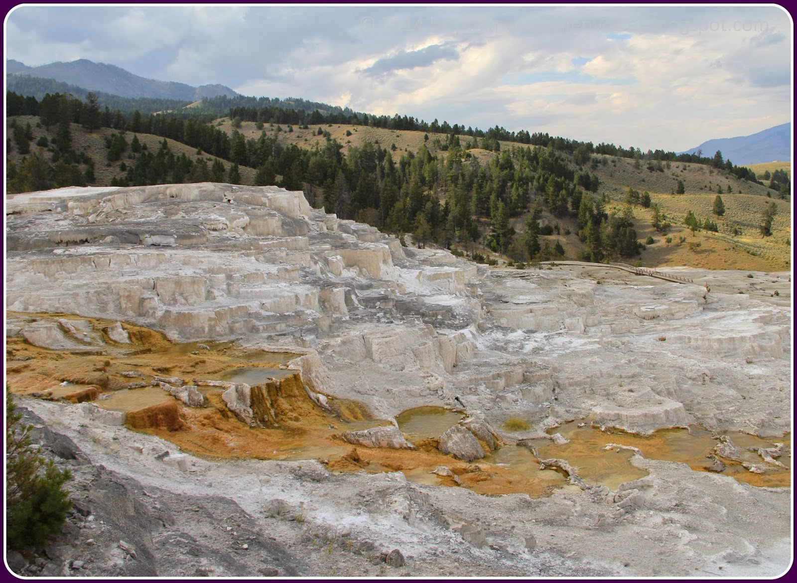 The diaries mammoth hot springs for Minerva terrace yellowstone