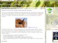 Classificação do Blog Maria Lopes3 e Ervas Medicinais