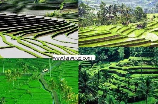 Subak-Budaya-Indonesia