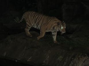Nite Zoo