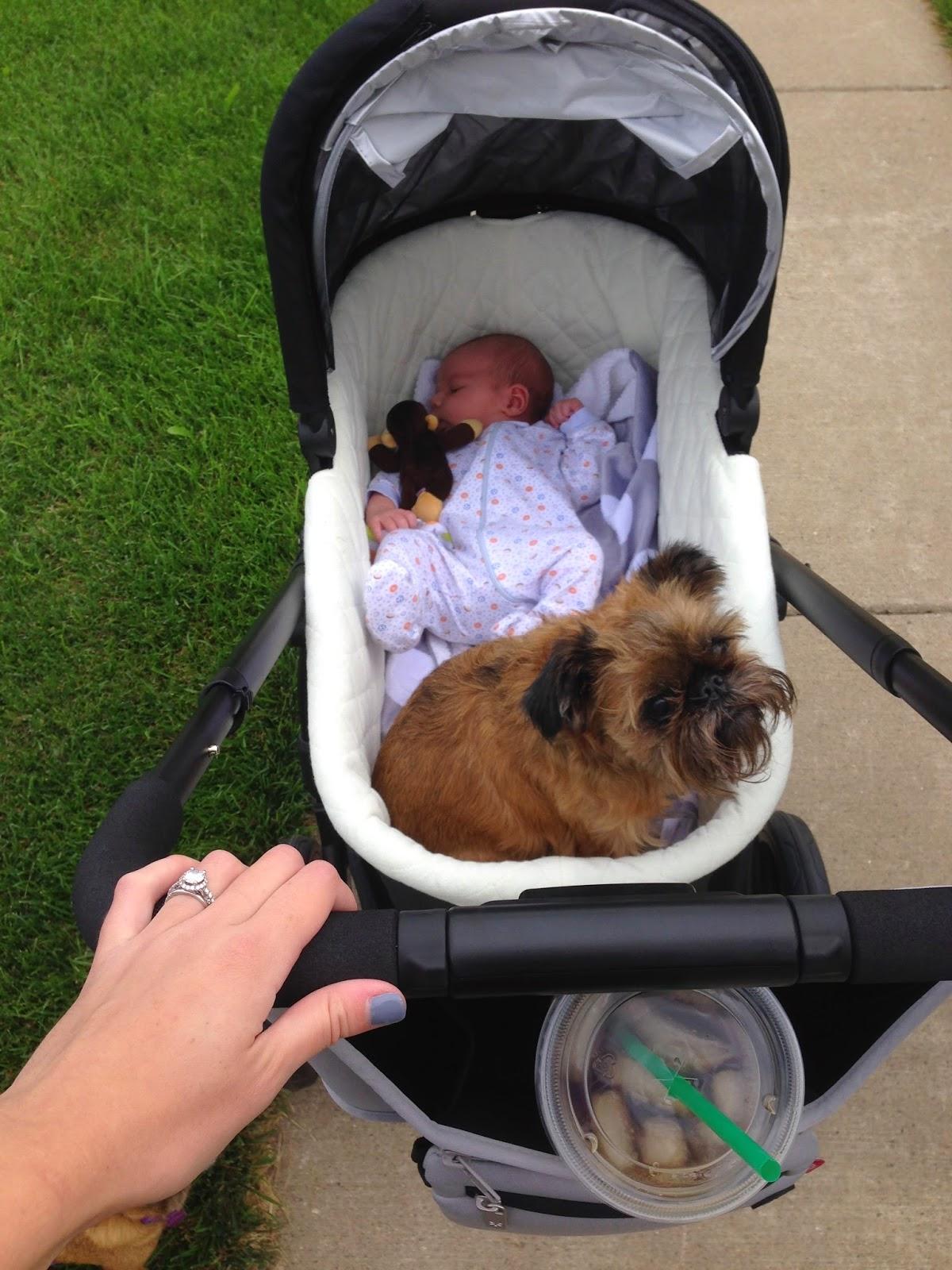 Uppa Baby Cruz Stroller W Mesa Infant Car Seat