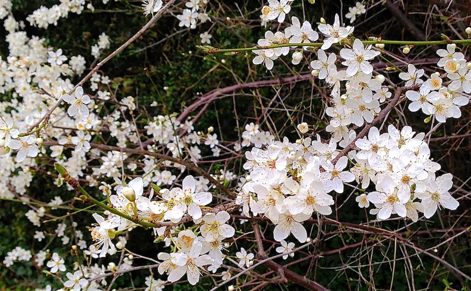 EmmasBeginning Spring