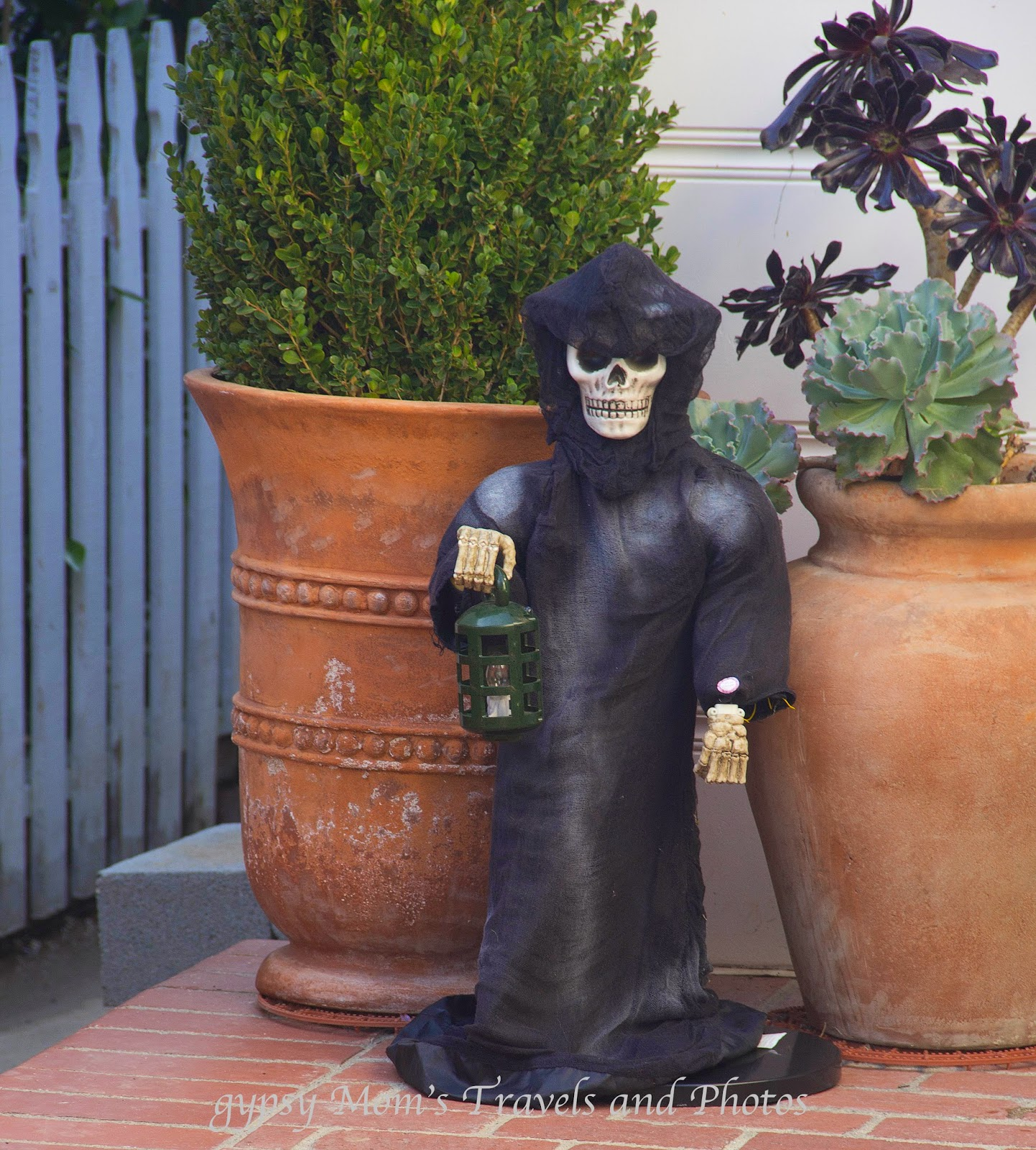 Protector of the plants in front of a house in Corona de Mar