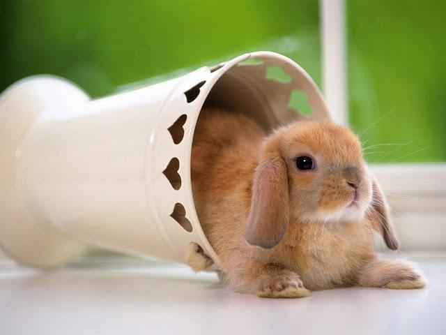 The pretty bunny