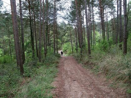 Caminant sota la Baga de la Serra