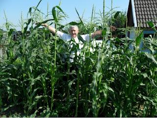 16 июля, кукуруза и я