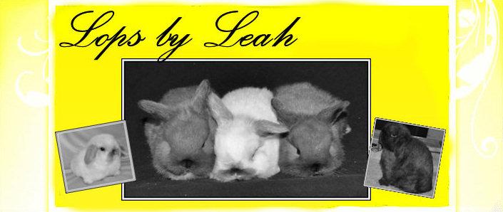 Lops by Leah