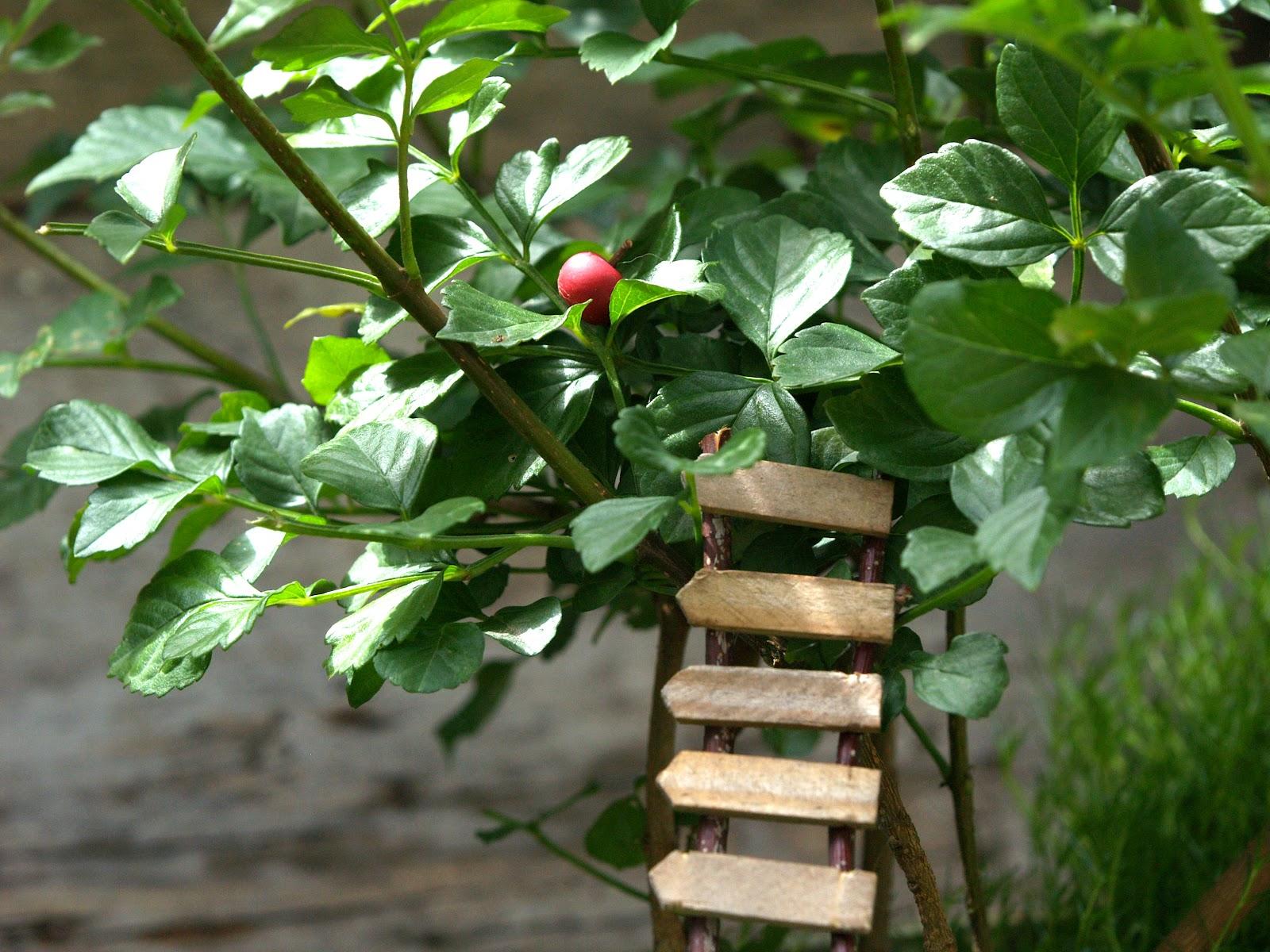 do your fairies need a ladder fairy garden