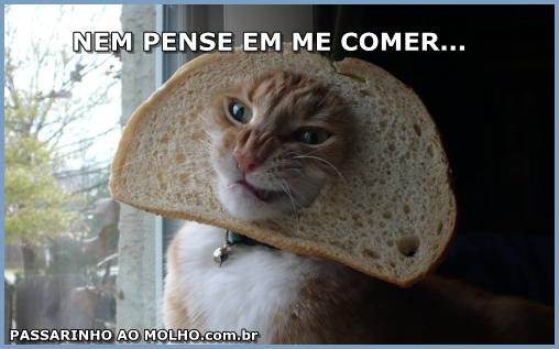 gato com pão de forma na cabeça