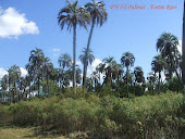 PN El Palmar - Colon -