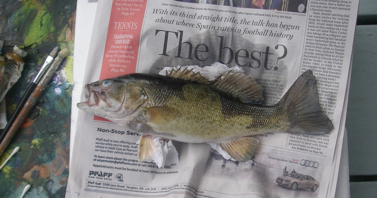 smallmouth bass research paper Bass fishing 101 :: essays research papers fc smallmouth bass research paper explain the time and cost requirements for each step in the methodology, based on your.