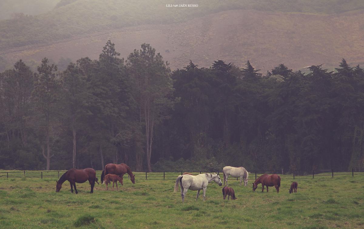 Los caballos de las haras, Cerro Punta.