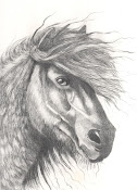 Shetland Pony, 2012