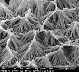 Nanowire Implants Offer Remote-Controlled Drug Delivery
