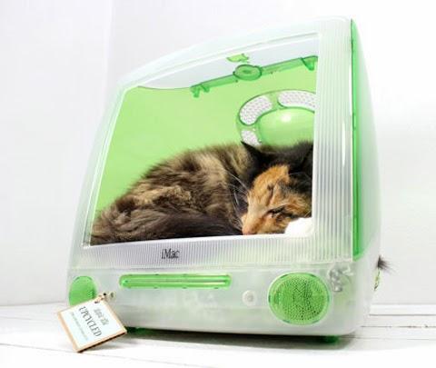iMac Kitten Beds