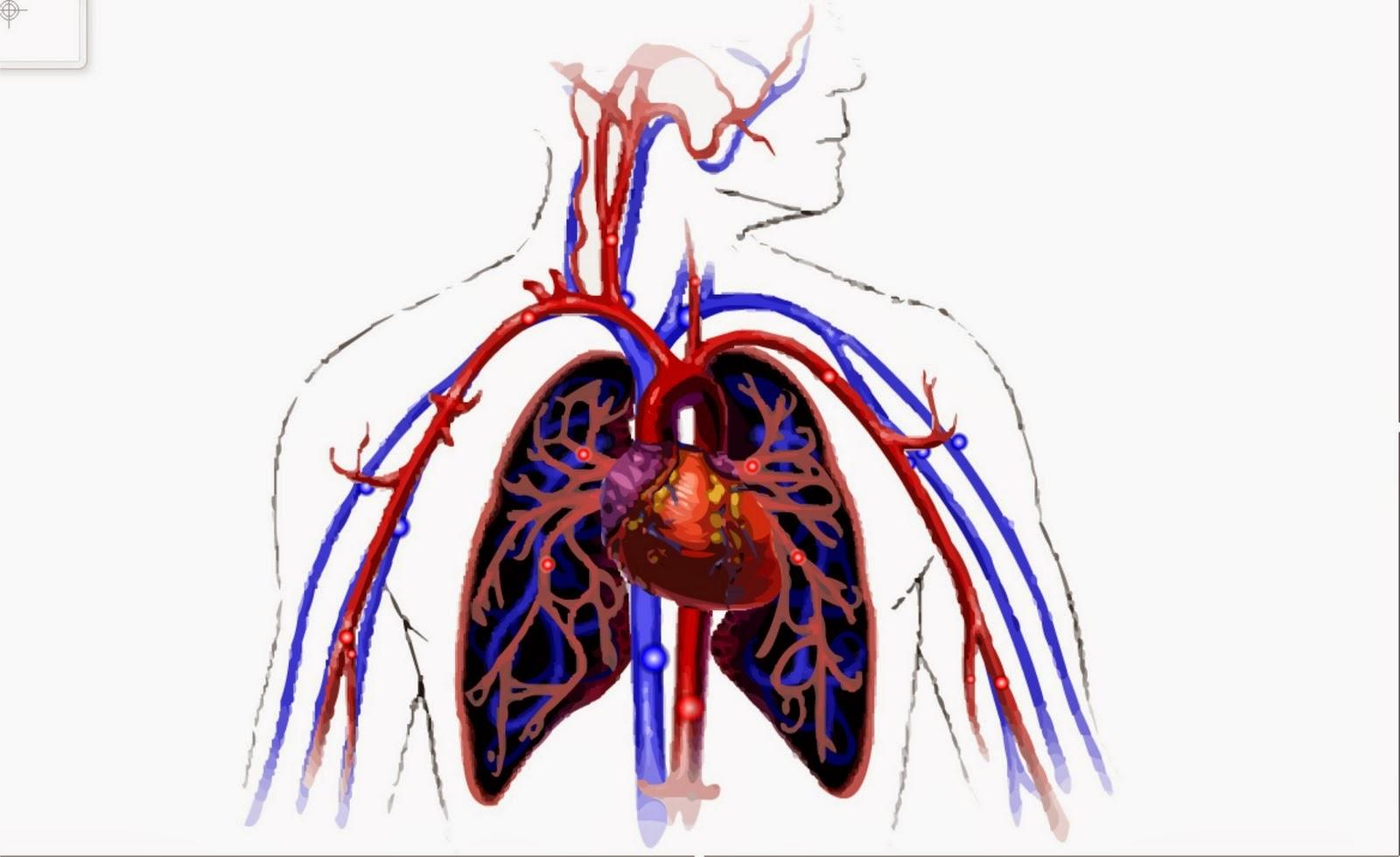 BIOLOGY EDUCATION: 11 Fakta Menarik tentang Peredaran Darah