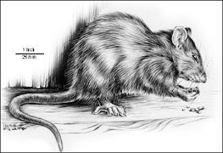 Controlling Rats