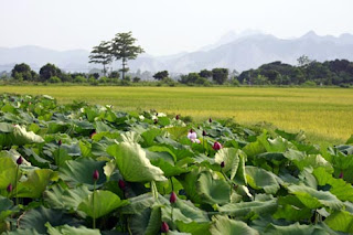 Ha Nam Province (Tỉnh Hà Nam) 1