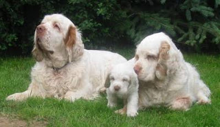 Clumber Spaniel Family