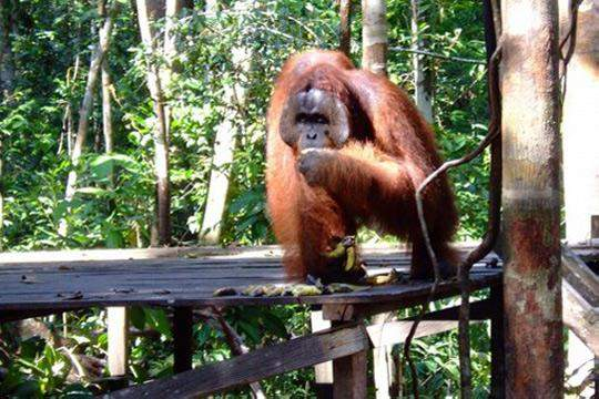 Taman Nasional Tanjung Puting 2