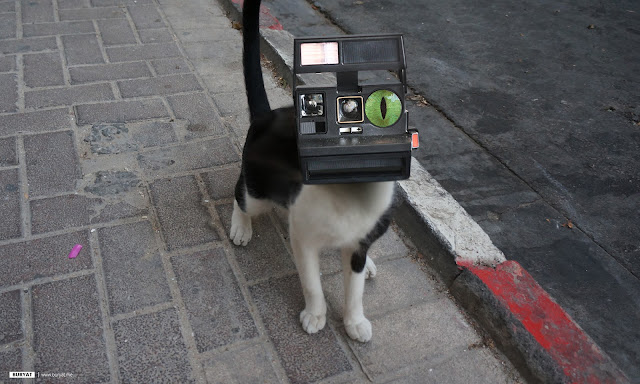 Refurbished cat - instant photo camera